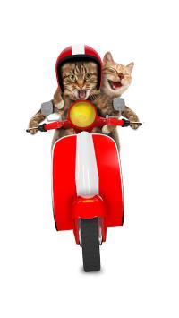 宠物 猫咪 开车 创意