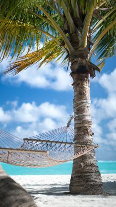 吊床 编织绳 铁树 碧海蓝天 椰树