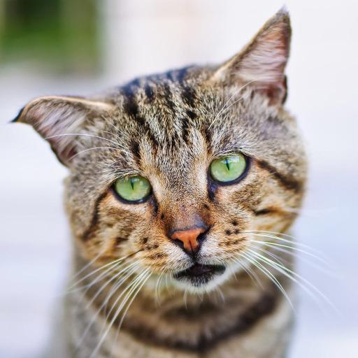 猫咪 宠物 丧脸 低垂