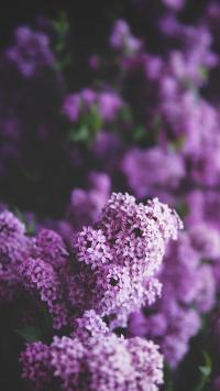 鲜花 紫色 小花朵 绽放