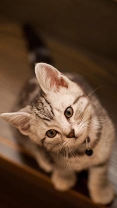 小奶猫 喵星人 可爱