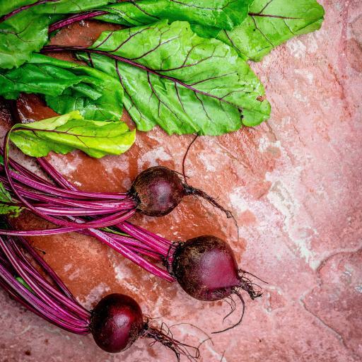 食材 蔬菜 樱桃萝卜 鲜红 菜叶