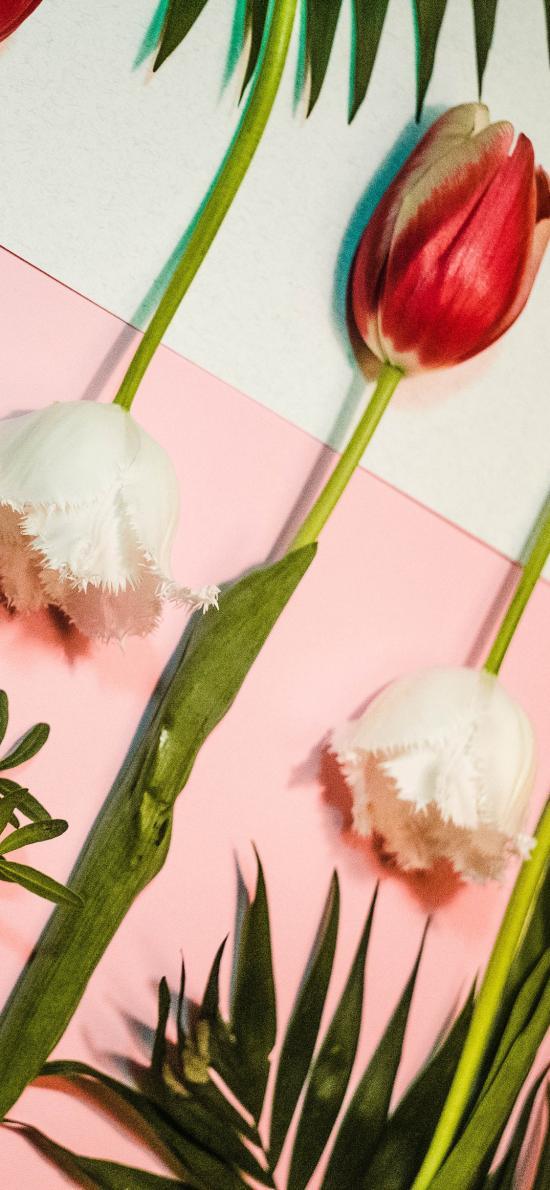 鲜花 郁金香 枝叶 花朵