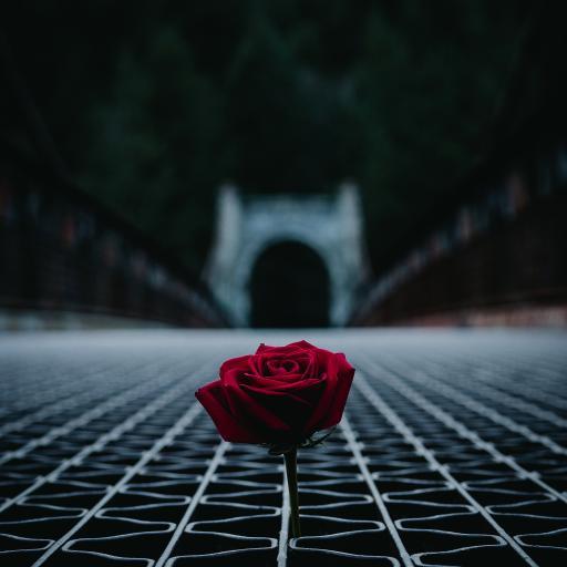 鲜花 玫瑰 桥梁 钢筋结构