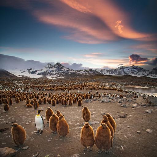 南极 企鹅 群居 毛茸茸