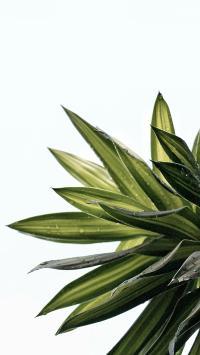 枝叶 绿植 露珠 水珠 密集