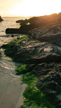 海岸 景色 苔藓 礁石