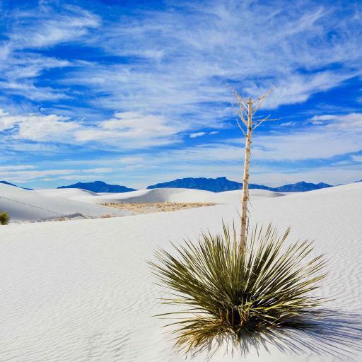 蓝天白云 沙漠绿植