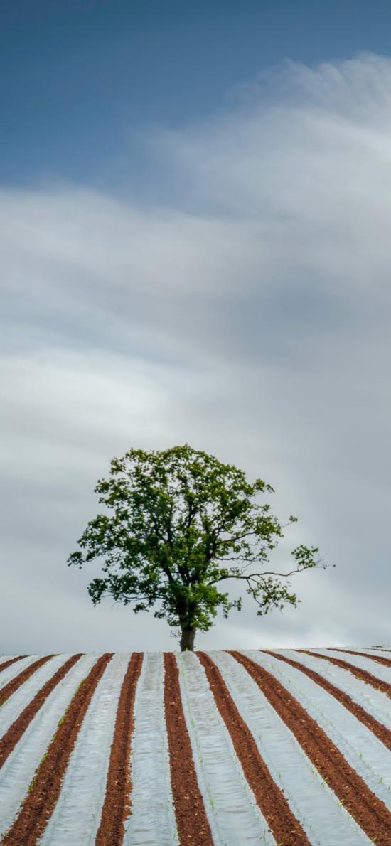 蓝天白云 田地 树木