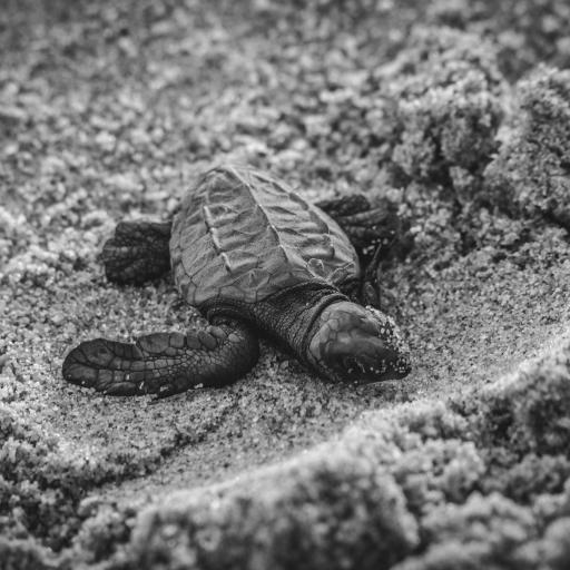 海龟 乌龟 沙地 幼小