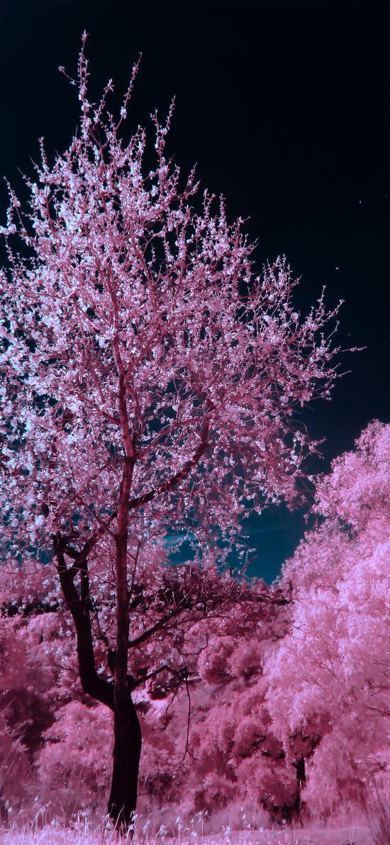 滤镜 树林 粉 色调
