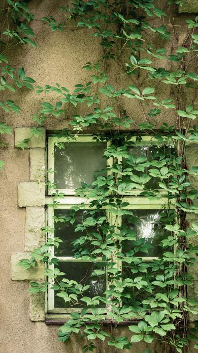 生长 窗户 房屋 老旧