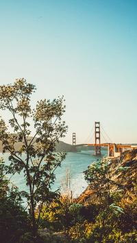 大桥 河流 树木 风景