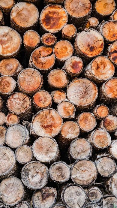木材 树木 圆 堆放