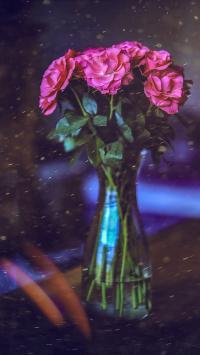 月季 鲜花 盛开 花瓶 玻璃瓶 滤镜