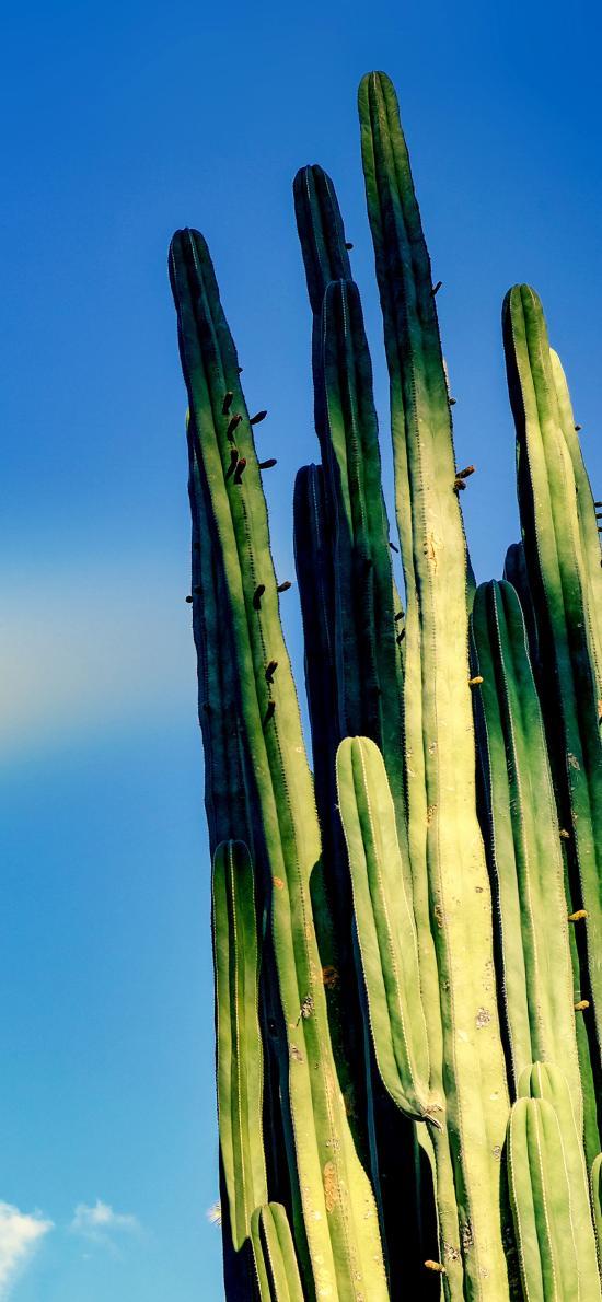 植株 仙人掌 沙漠之花 防辐射