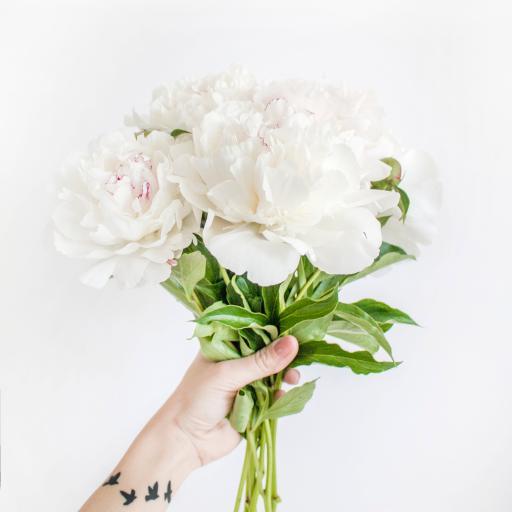 鲜花 花束 唯美 枝叶 盛开