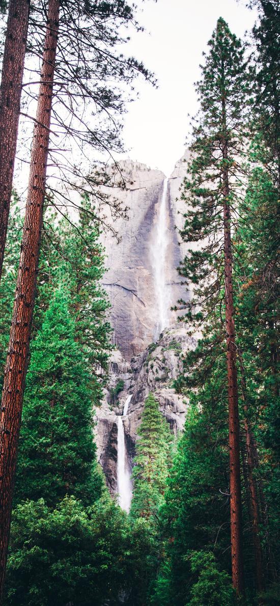 山水 树木 耸立 树林