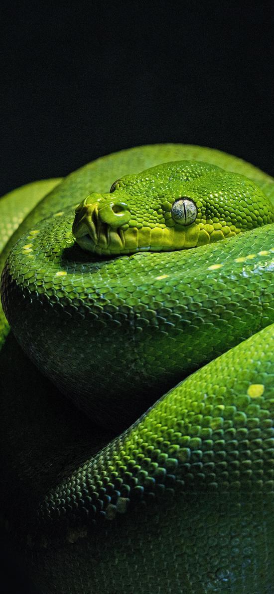 寵物 青蛇 樹干 冷血