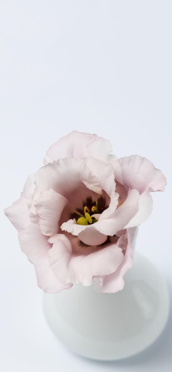 瓷瓶 插花 鲜花 粉色 绽放
