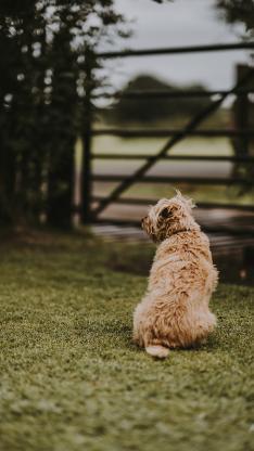 小狗 背影 草地 庭院