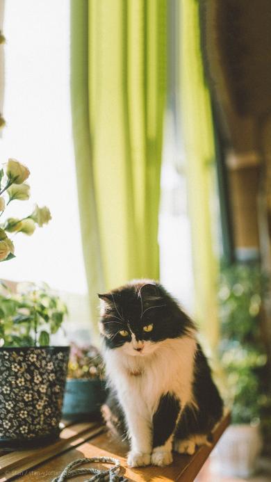 宠物猫 喵星人 黑白