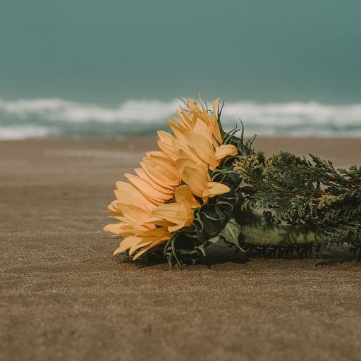 向日葵 鲜花 沙滩 海滩 枝叶