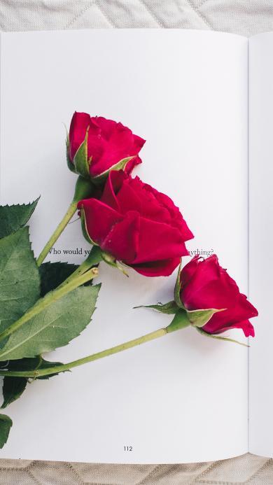 鲜花 玫瑰 书本 枝叶