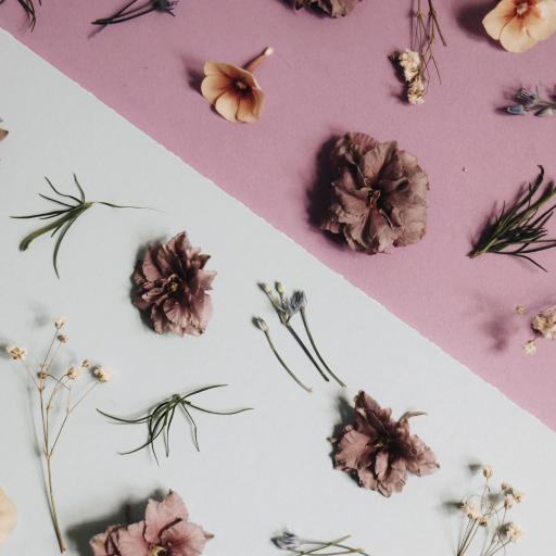 鲜花 干花 平铺 装饰