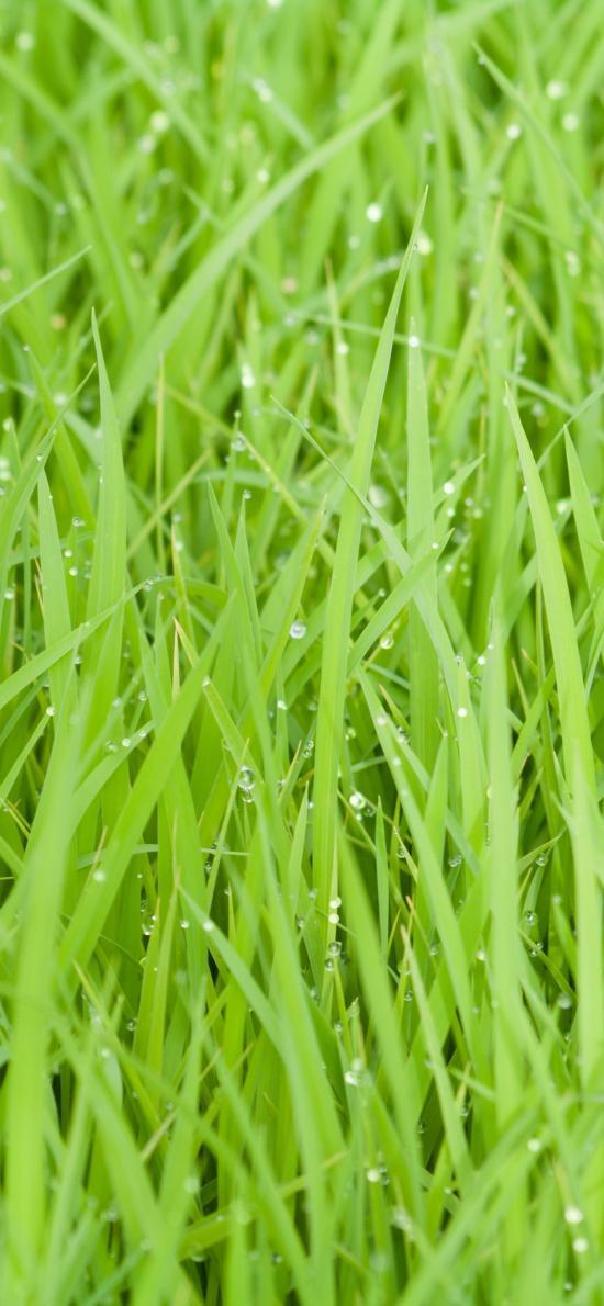 小草 草坪 绿色 春意 大自然