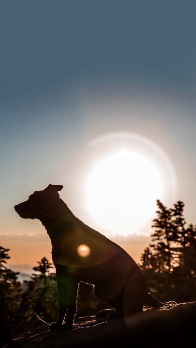 郊外 狗 侧影 太阳