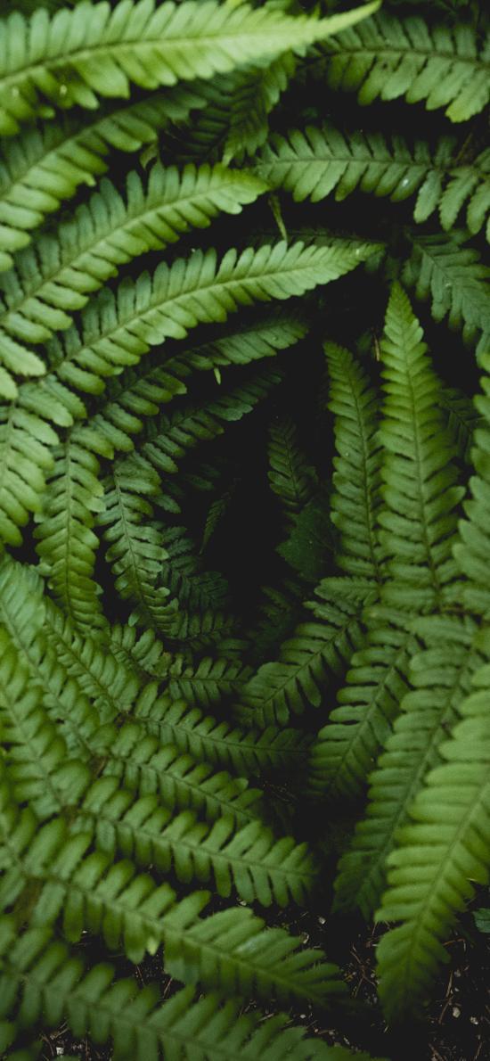 蕨类 绿植 密集