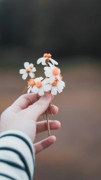手部 鲜花  小雏菊