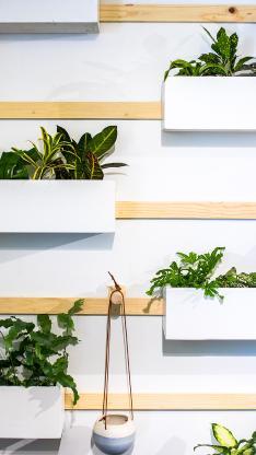 墙壁 盆栽 绿化 观赏