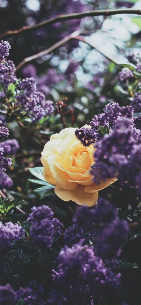 花丛 鲜花 紫色 黄色