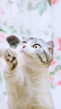 猫咪 可爱 萌 喵星人 宠物