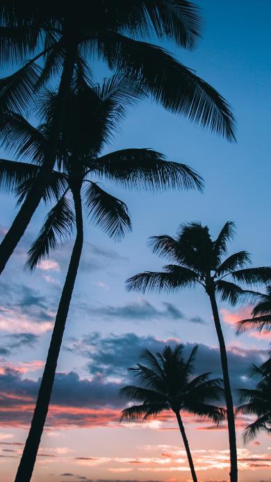 椰树 天空 夕阳 彩霞