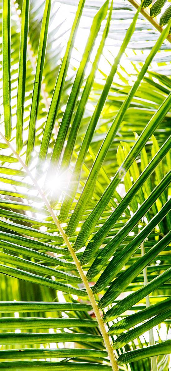 棕榈叶 绿色 阳光 叶子