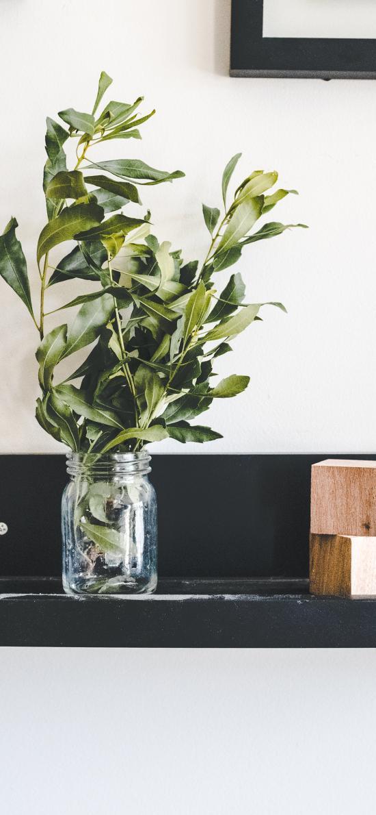 静物 枝叶 绿叶 玻璃瓶 木块