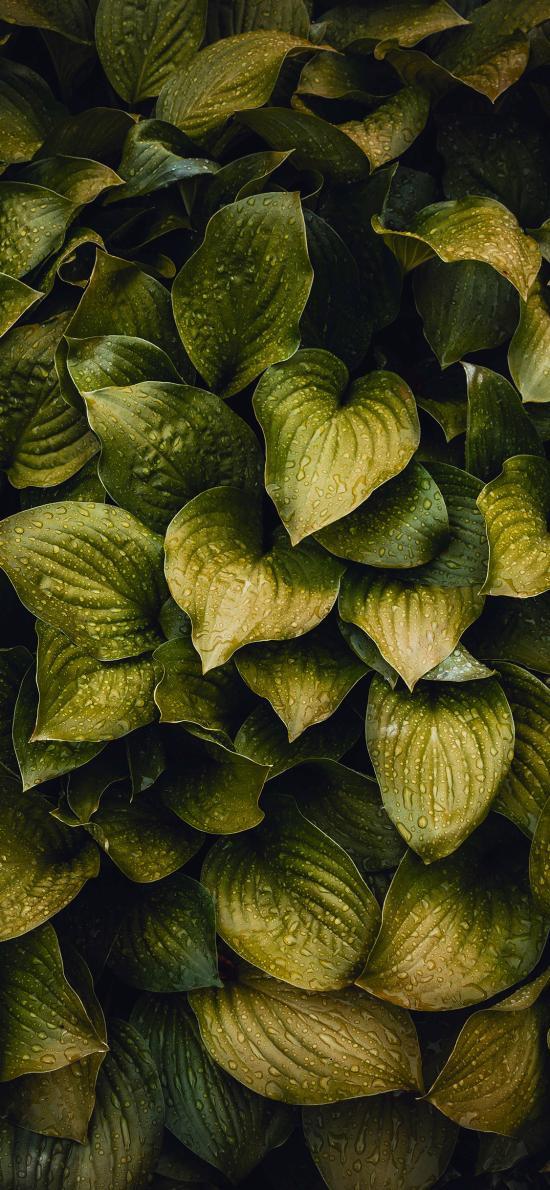 绿植 露珠 生长 滤镜 枝叶