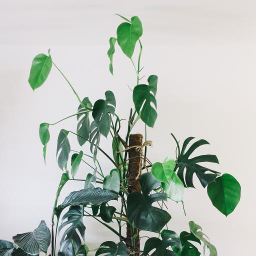 绿植 盆栽 室内 观赏