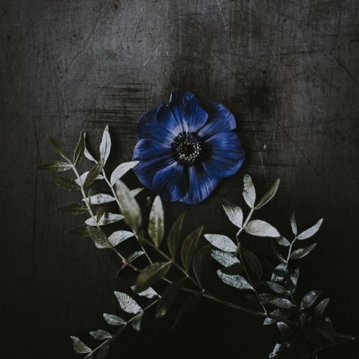 鲜花 盛开 蓝色花 花瓣 花蕊