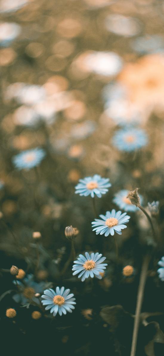 鲜花 小菊花 清新 蓝色