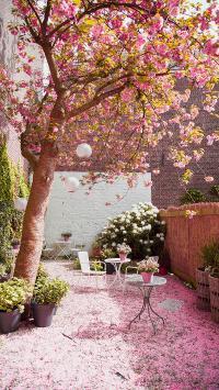 花季 落花 庭院 桌椅