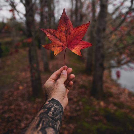 枫叶 红色 手臂 纹身