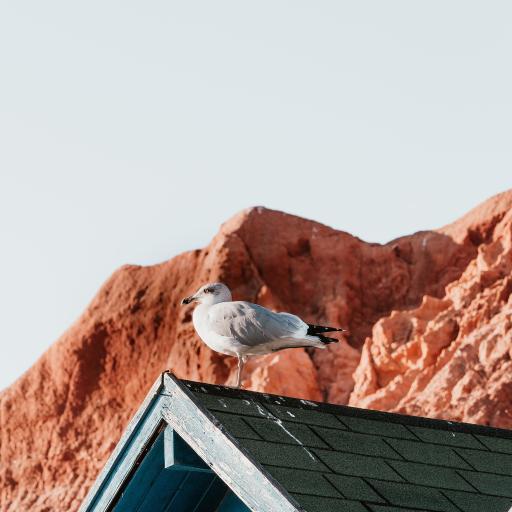 鸟 屋顶 站立 屋檐