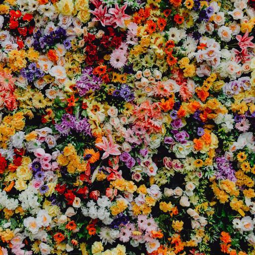 花墙 鲜花 色彩 浪漫 密集