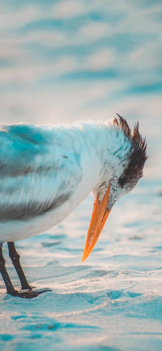 海灘 飛鳥 燕鷗 白色