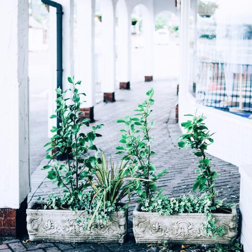 盆栽 花盆 绿植 栽种