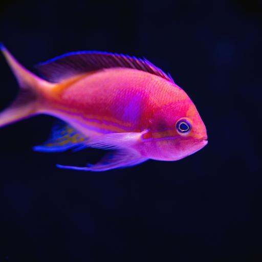 鱼 热带 观赏鱼 光线